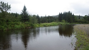 A river flows by tall grass and conifer trees.