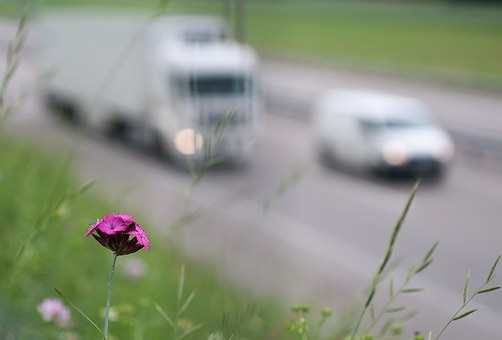 a purple flower with vehicles traveling on a highway in the distance