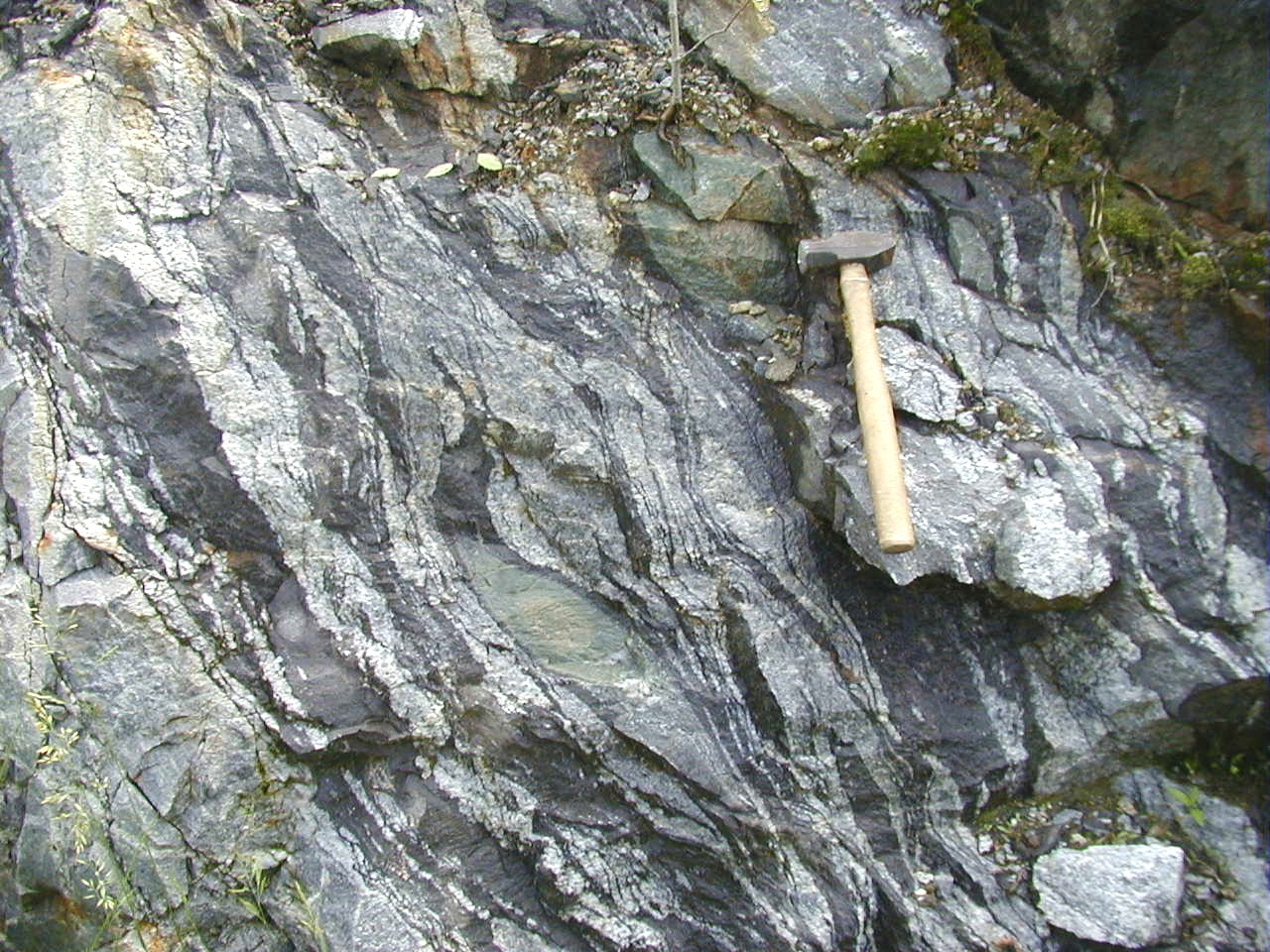 a close-up of gneiss