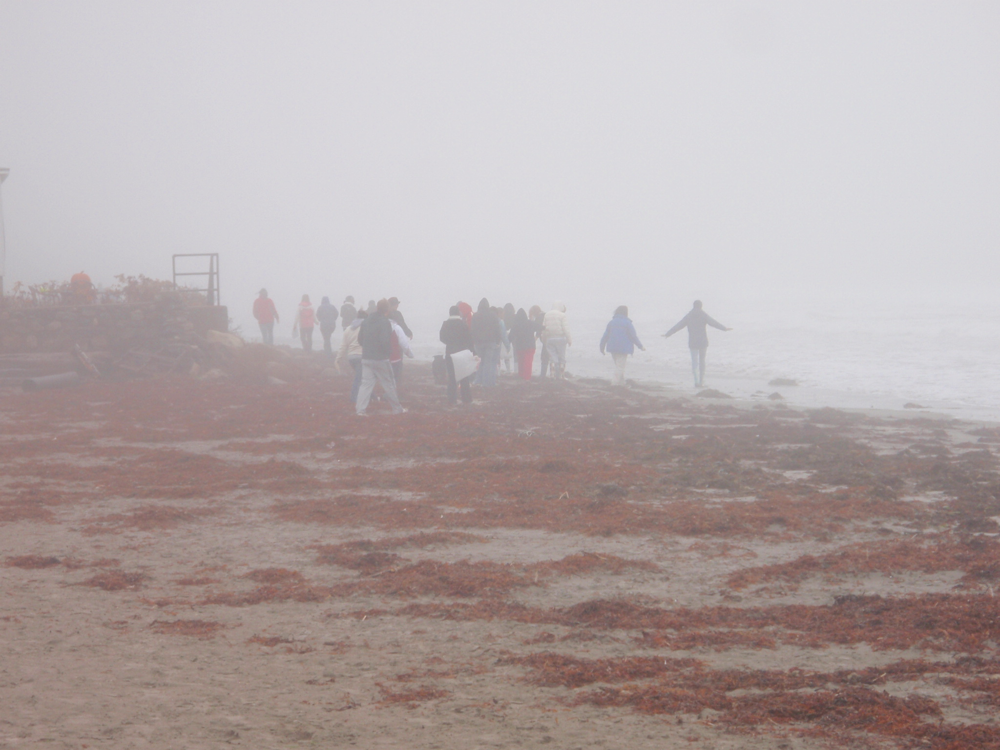 group of volunteers cleaning up the beach in the fog